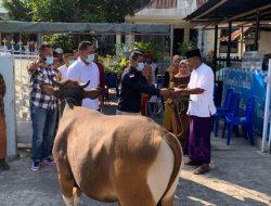 Bunda Julie Laiskodat Beri Bantuan Dua Hewan Kurban untuk Dua Mesjid di Kabupaten Ende